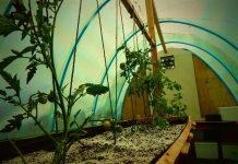 Huerto orgánico de hospital regional de Arica, usa servicios ecosistémicos para tratar a pacientes