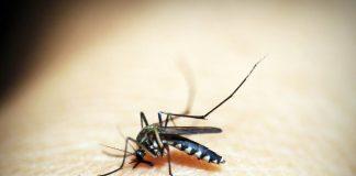 Janssen anuncia un nuevo mecanismo de acción contra el dengue, que se muestra prometedor en datos publicados en Nature